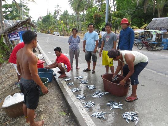 sardines on the street
